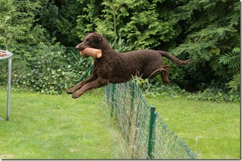 Coco über Zaun mit